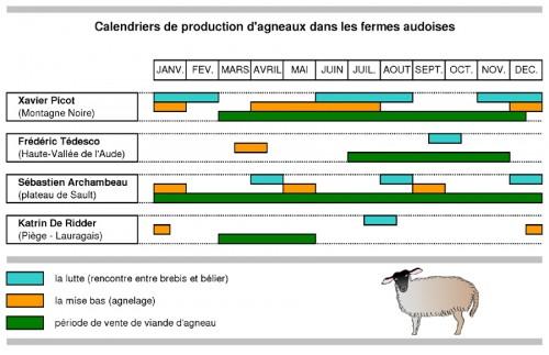 calendrier de production des agneaux