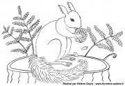 Un écureuil prêt à se mettre à table !