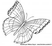 Un joli papillon !