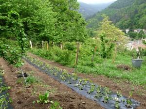 jardin potager gincla reduit
